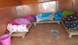 112carlotagalgos Galgos bed