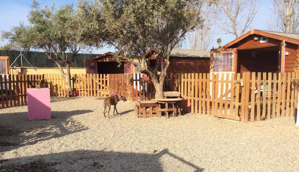 112carlotagalgos wooden cabins
