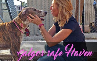 Galgos Safe Haven