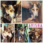 Avisha