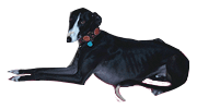 112carlotagalgos.com | A sanctuary for the galgos